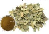 Estratto naturale del foglio del Loquat dell'acido 20%~98% di Ursolic che allevia tosse