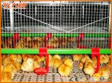 Подгонянные машины дома цыпленка с стальной конструкцией в горячем сбывании