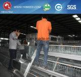 공장 판매 대리점 유형 층 닭 감금소