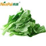 100% natürliches spraygetrocknetes Gemüsepuder-chinesisches blühendes Kohl-Puder
