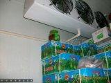 Handels- u. industrieller Kühlraum/Arbeitsgefriermaschine