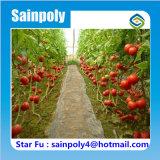 Serre chaude agricole de film de tomate de la Chine à vendre