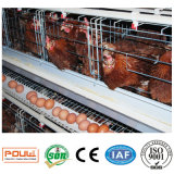 Автоматические гальванизированные клетки слоя оборудования птицефермы для Кении