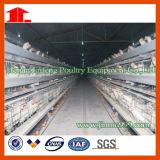 Machines de ferme avicole de poulet de couche avec le modèle d'ensemble complet