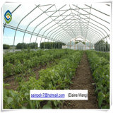 다중 경간 플레스틱 필름 농업 온실