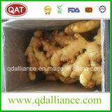 Gros gingembre frais avec la bonne qualité et le prix concurrentiel