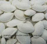 Semillas de calabaza blancas nevadas asadas y saladas de la mejor calidad