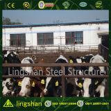 Stahlkonstruktion-Vieh-Stall-Gebäude-Bauernhof-Halle