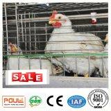 A galinha de grelha galvanizada das aves domésticas prende o sistema do equipamento