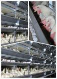 Système automatique durable de cage de poulet de couche de batterie de bâti du meilleur modèle H