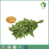 Gesundheits-Produkt-Kraut-Auszug-/Nettle-Wurzel-Auszug Beta-Sterine, Sitosterin