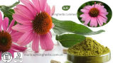 100% естественное Echinacosides (высокое качество, сходнаяа цена)