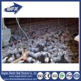 エクスポートのアルジェリアの養鶏場のための肉焼き器のニワトリ小屋