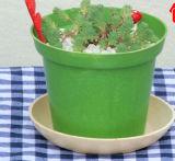 정원과 집 훈장 대나무 섬유 화분 (BC-FP1047)