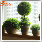 Indoor Bonsai Plant Trees Green Grass Ball
