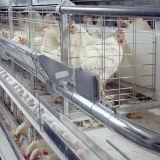 Tipo automatico strumentazione di H della tettoia di controllo della gabbia del pollo