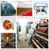 Equipment automatico nel mandriano di Poultry House From Super