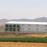 Moderno e Beautiful Light Steel Structure Poultry Chicken House Building
