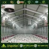 Costruzione d'acciaio della Camera di pollo di basso costo di Qingdao