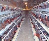 Système de matériel de cage de poulet d'éleveur utilisé par ferme avicole (un type bâti)