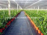 Cubierta de tierra tejida plástico del control de Weed Mat/PP/precio plástico negro de la cubierta de tierra de la barrera de Chinadurable Weed