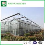 Landbouw/de Commerciële Groene Huizen van de Tuin van het Glas voor Bloemen