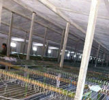 Casa de grelha da construção de aço da boa qualidade de baixo custo/exploração agrícola comerciais