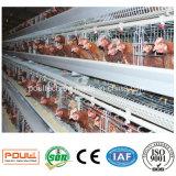 Système automatique de nettoyage d'engrais d'usine de cage de poulet