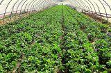 Анти- сеть насекомого отключений, сеть предохранения от плодоовощ