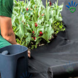 反紫外線抵抗力がある園芸植物カバー中国の卸し売り農業PP非編まれたファブリック