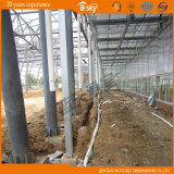Agricultural Planting를 위한 긴 생활 Span Glass Greenhouse