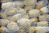 Fresh Potato Holland Veriety Exported Quality