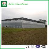 Giardino/coltivare le serre del film di materia plastica del traforo per Growing fiore/dell'ortaggio