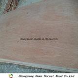 madera contrachapada del embalaje de Bintangor de la base del álamo de 12m m
