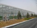 최신 판매 야채 또는 정원 또는 꽃 또는 농장 유리 온실