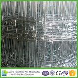 Rete fissa tessuta galvanizzata della rete metallica dell'allevamento per gli animali
