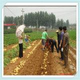 걷는 트랙터를 위한 4u-650A 감자 /Sweet 감자 수확기
