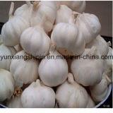 Свежие упаковка урожая 1kg цены 2016 чеснока новая малая