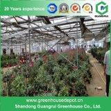 Invernadero solar de la película plástica para el establecimiento vegetal