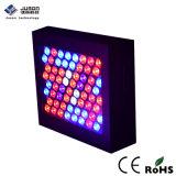 Wholsale 300W LED 플랜트는 빛 가득 차있는 스펙트럼을 증가한다