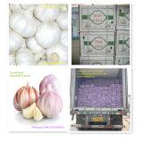 Aglio bianco fresco 4.5/5.0/5.5/6.5 della Cina del nuovo raccolto
