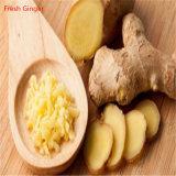 Порошок выдержки корня имбиря 5% Gingerols