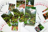 Farbenreiches Drucken angepasst, Playingcards, Schürhaken bekanntmachend