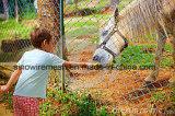 馬の農場のためのSailinのチェーン・リンクの塀