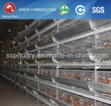 Jaula principal de la granja del pájaro de China con las partes completas en Zambia/Malasia