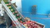 Vegetais e secador das frutas