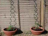 電流を通されたTomato Spiral Support Wire 8mm*1.5m