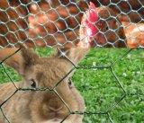Engranzamento de fio da galinha/rede de fio sextavada