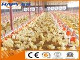 Équipement d'alimentation des éleveurs avec hangar de poulet à structure en acier