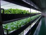 O cultivo Não-Solar interno das plantas cresce a luz